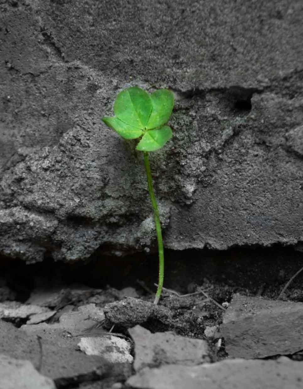 biorisanamento rivegetazione e recupero ambientale