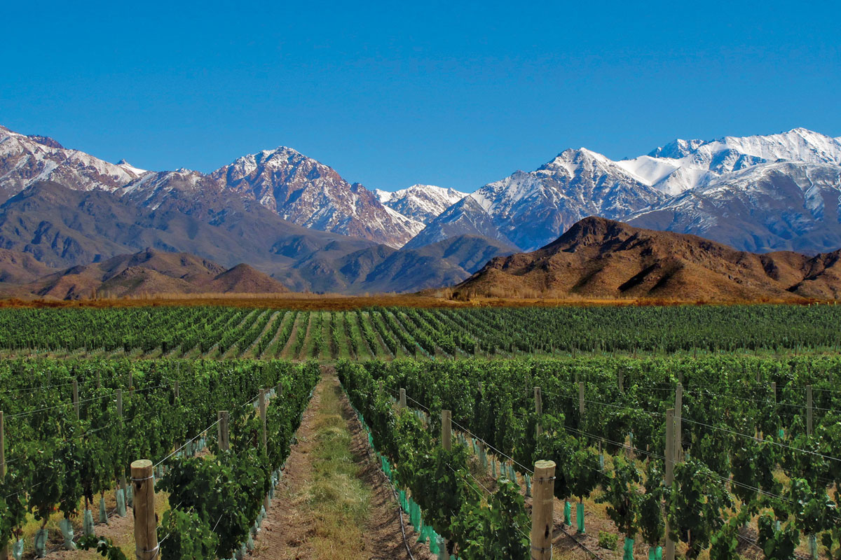 VITISOM al convegno internazionale sulla viticoltura GiESCO - cover