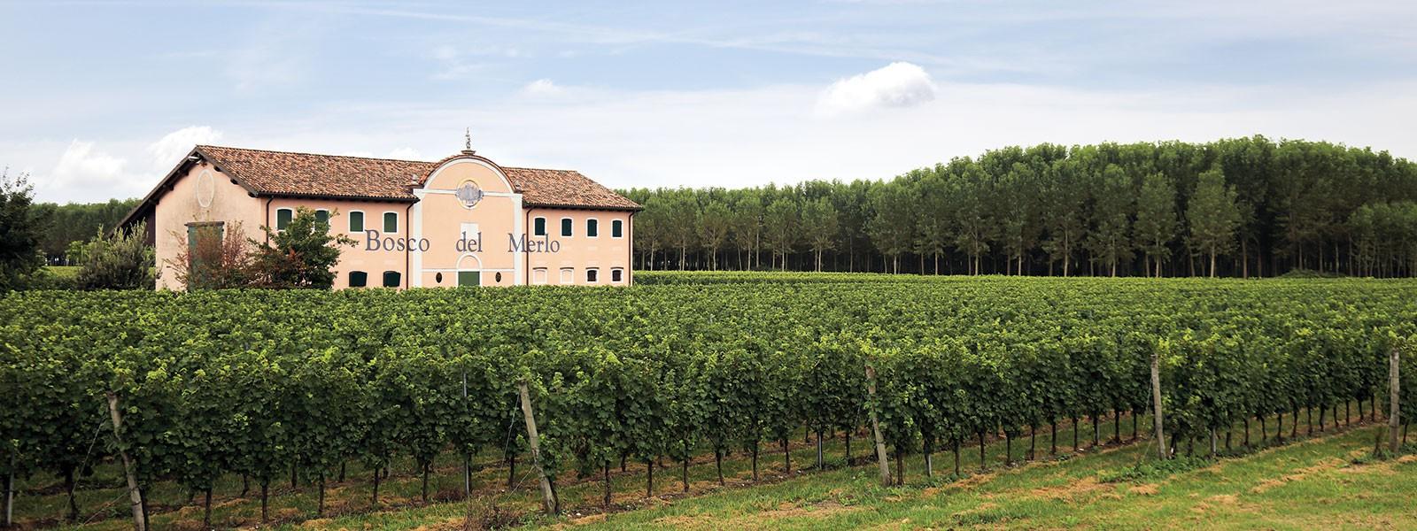 Innovazione e biodiversità in viticoltura - cover
