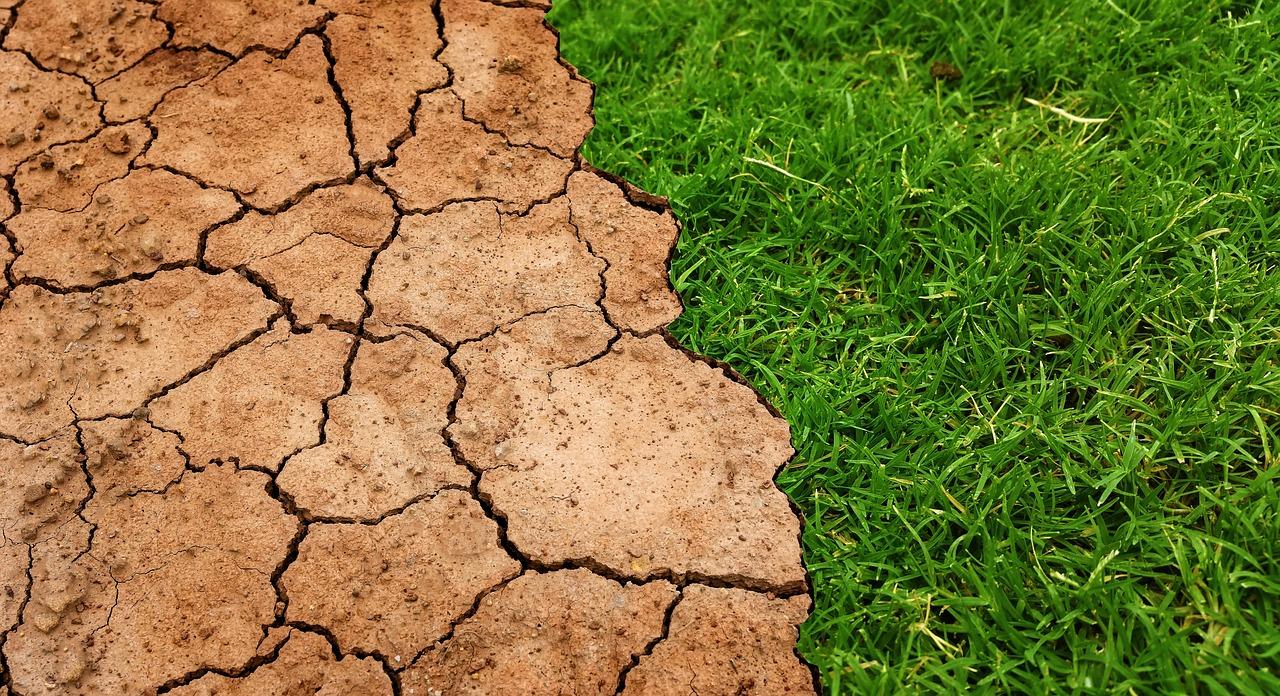 Conferenze internazionali sui nutrienti del suolo - cover
