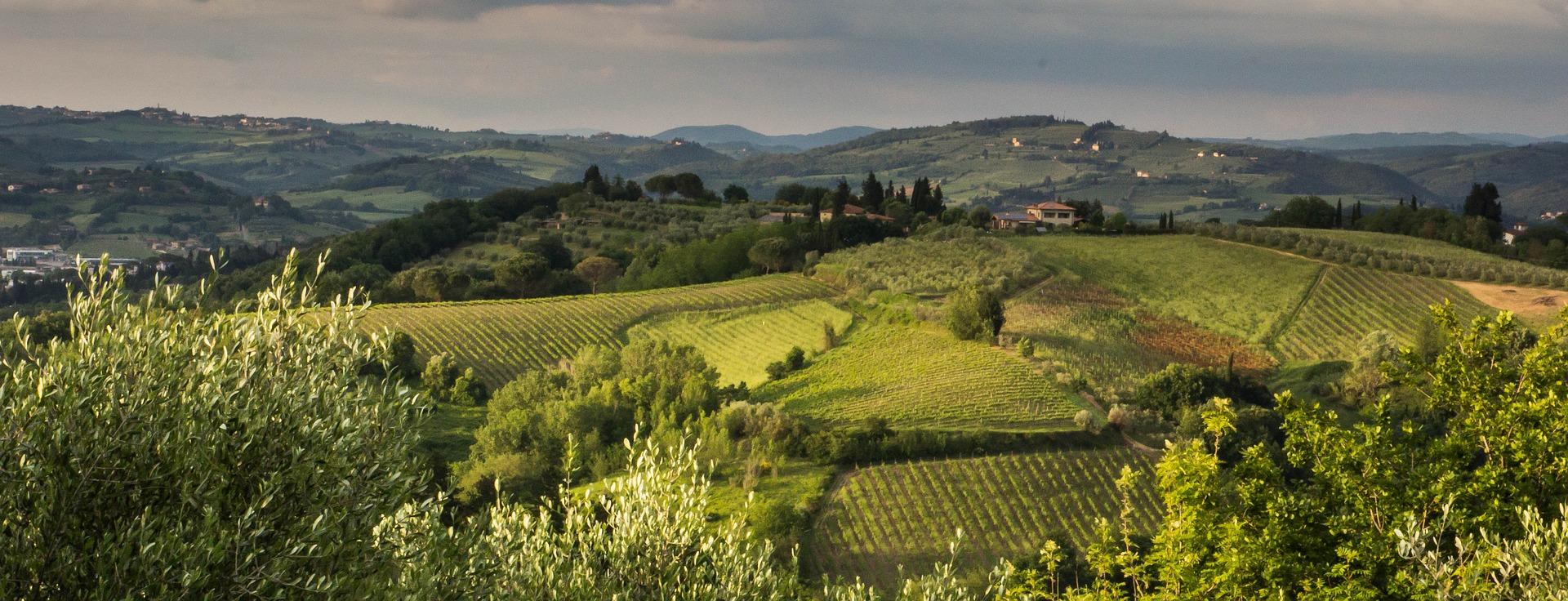 Cabernet e Sangiovese: le uve presto mature - cover