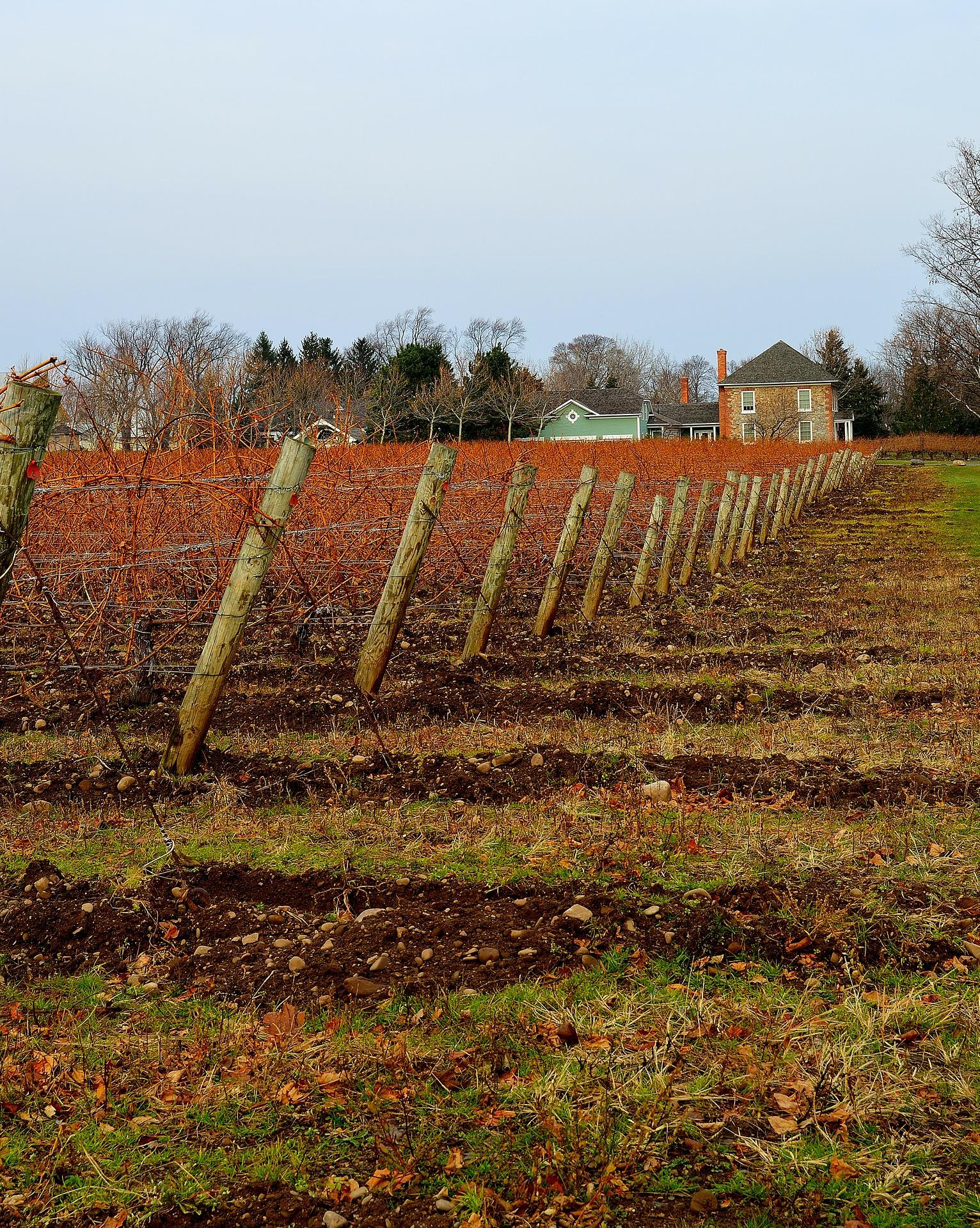 Concimazione delle viti - cover