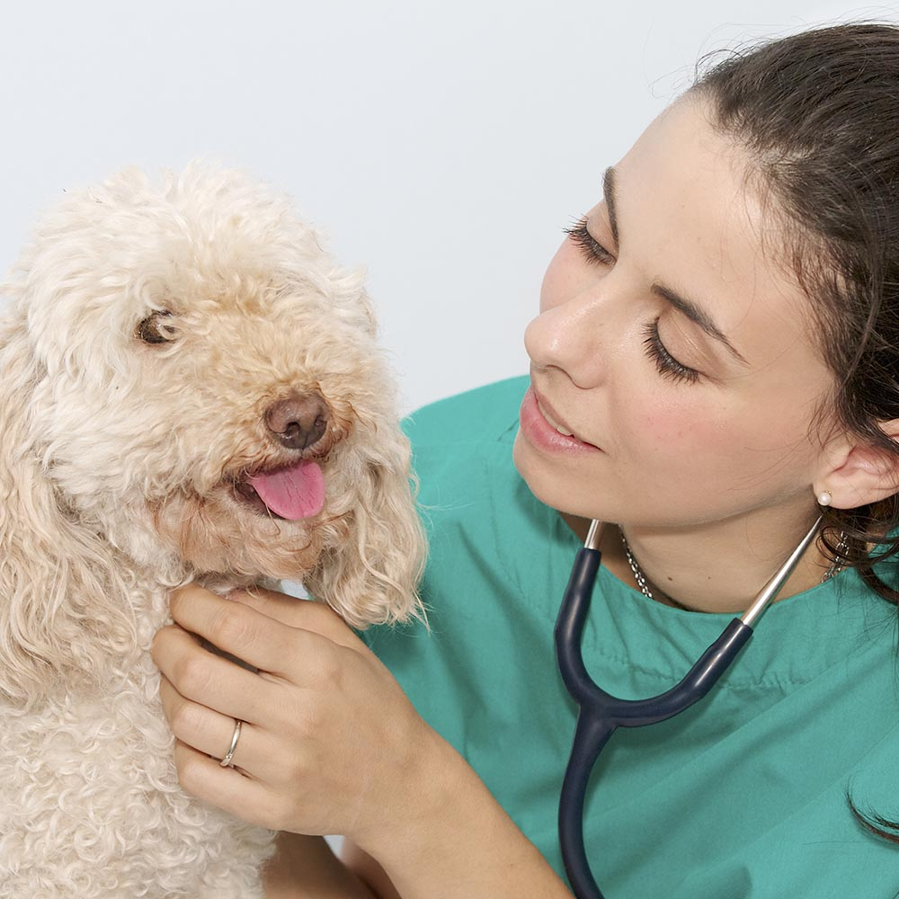 corsi seminari veterinari