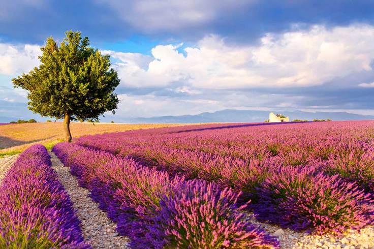https://s3.eu-central-1.amazonaws.com/gj-test/web/uploads/images/thumbs/0/csv/2669111b/2_b_Lavendel_Provence.jpg