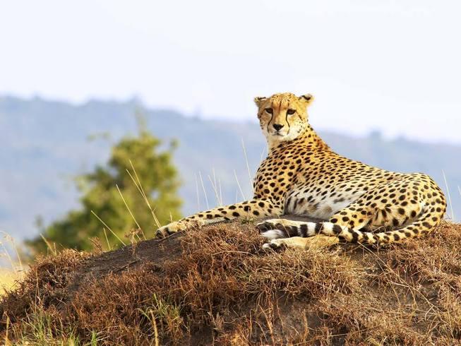 https://s3.eu-central-1.amazonaws.com/gj-test/web/uploads/images/thumbs/0/csv/6a7d434f/e_kenia-tensania-reise.jpg