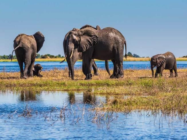 https://s3.eu-central-1.amazonaws.com/gj-test/web/uploads/images/thumbs/0/csv/91b557e2/a_botswana-reise.jpg