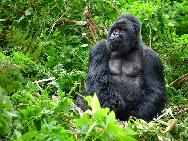 https://s3.eu-central-1.amazonaws.com/gj-test/web/uploads/images/thumbs/0/csv/be6a06f6/a_uganda-reise.jpg