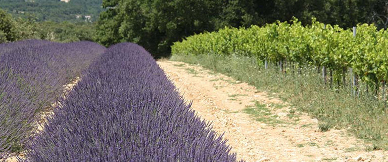 https://s3.eu-central-1.amazonaws.com/gj-test/web/uploads/images/thumbs/1/Provence-Weinradel.jpg