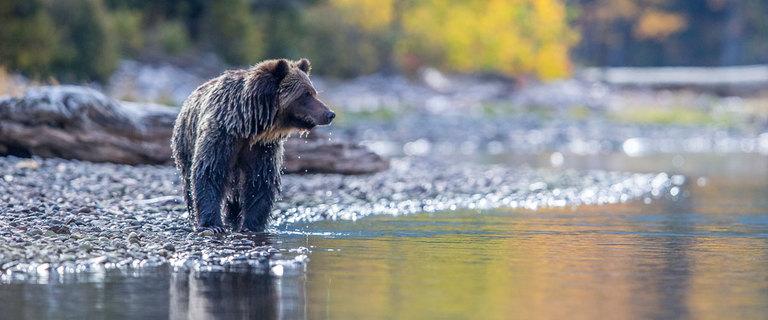https://s3.eu-central-1.amazonaws.com/gj-test/web/uploads/images/thumbs/1/kanada-wildlife.jpg