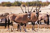 https://s3.eu-central-1.amazonaws.com/gj-test/web/uploads/images/thumbs/2/csv/d0a309ab/1_namibia_oryx.jpg