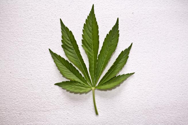Czy można poddać pracownika narkotestom?