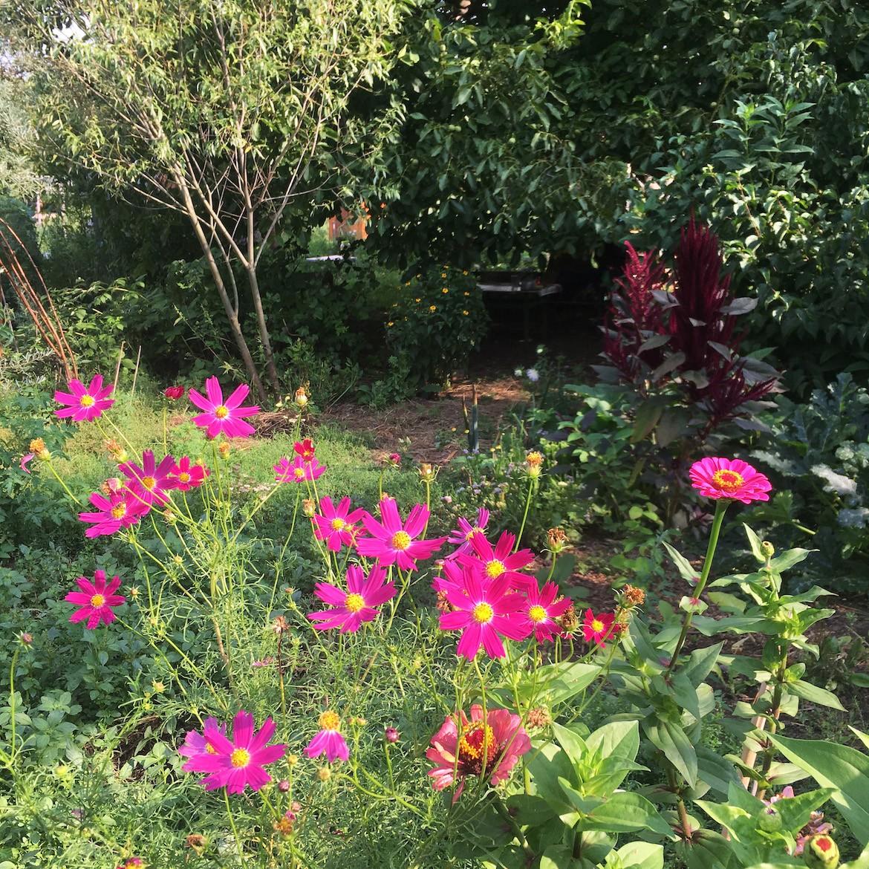 A zöldségközösség heti egy kerti napot is jelent, ha magam megyek a zöldségemért