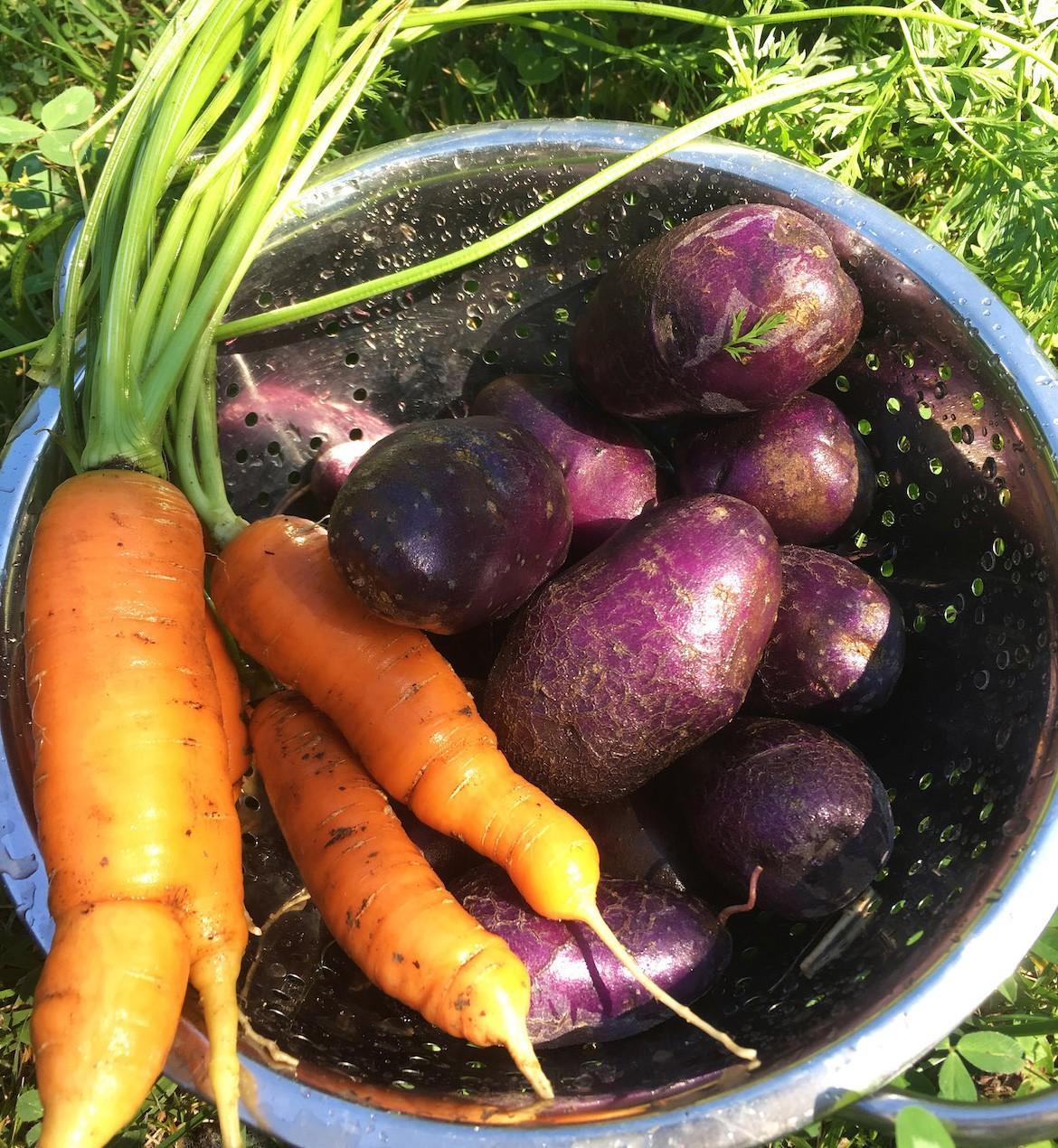 Ha már lett kertem, néhány egyszerűen termeszthető zöldséggel (még) én is sikerrel jártam - vegyszer nélkül, helyben, csomagolás nélkül.