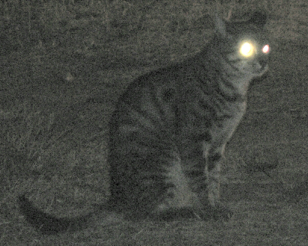 Why do cats\' eyes glow in the dark? - Humbot - Your Smart School Buddy