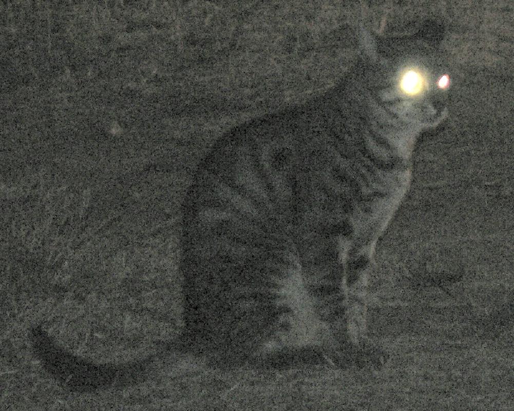 Glowing Human Yellow Cat Eyes