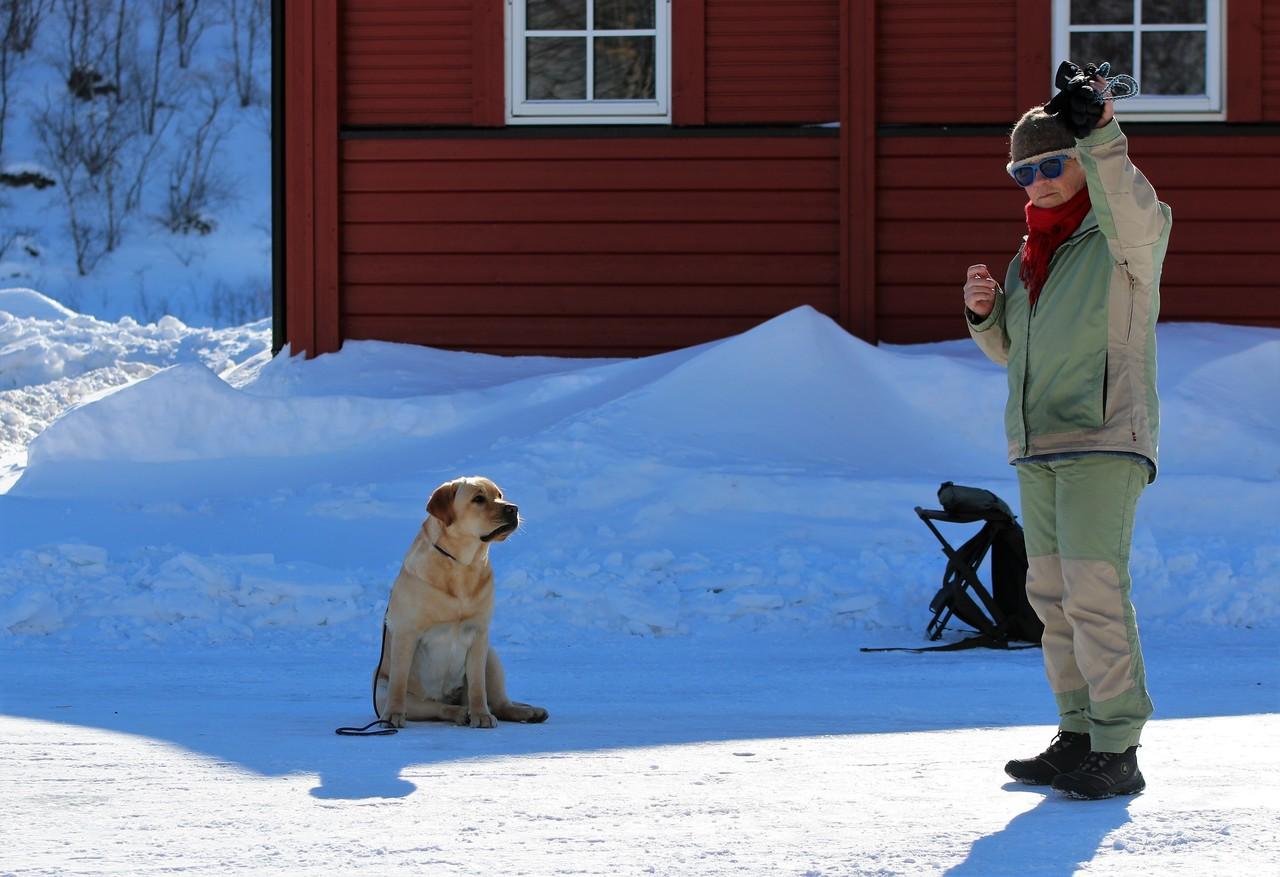 Gamle joggesko kan være et leketøy for hunder, men skader