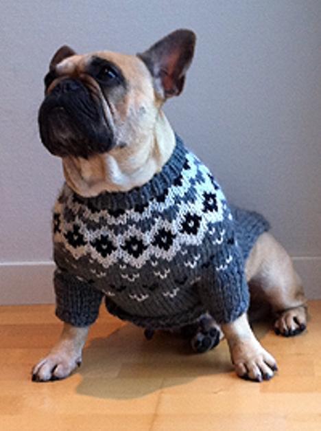 Genser til stor hund | FINN.no