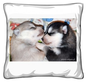Poduszka ze szczeniaczkami
