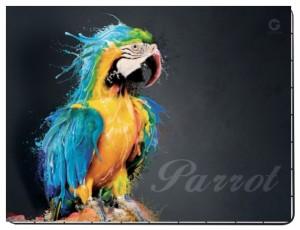 Niebieska Papuga puzzle 80 elementów