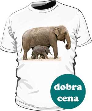 Słoń męska