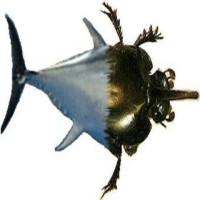 fishbeetle