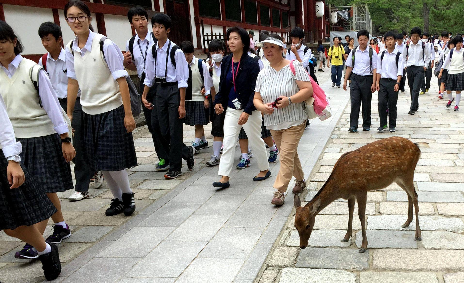 japonia nara daniel sarna mundurki iglawpodrozy
