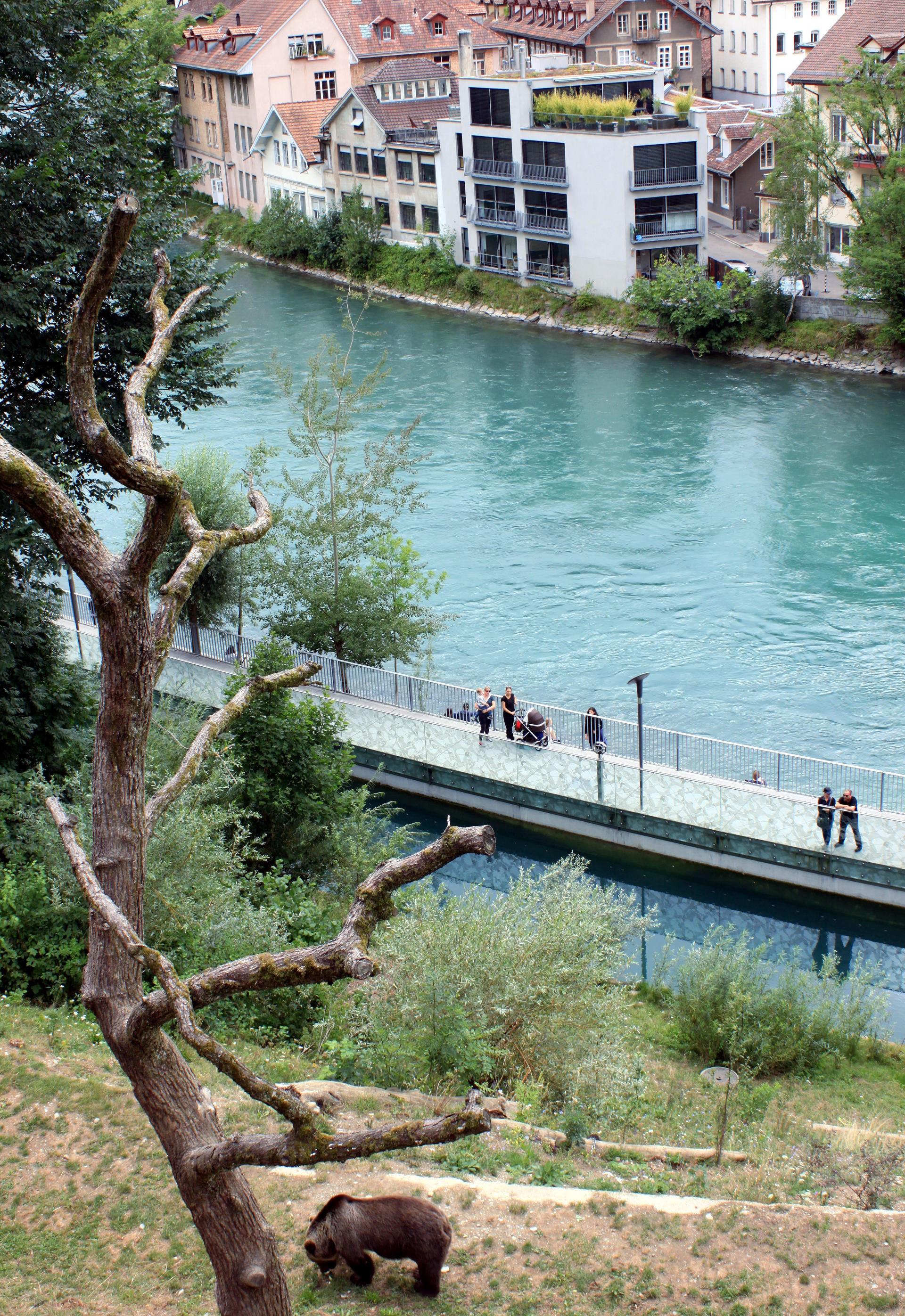 szwajcaria berno bern rzeka aare most zoo niedzwiedz widok staremiasto stolica iglawpodrozy