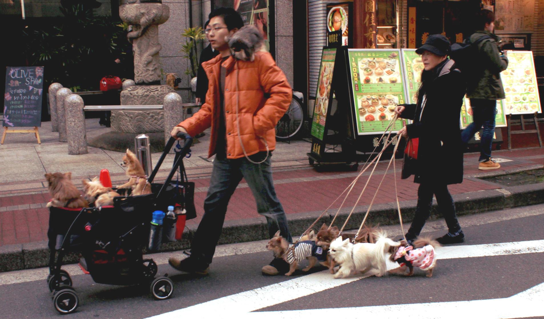 tokio japonia tokyo japan ulica psy psywwozku japonskiepsy iglawpodrozy
