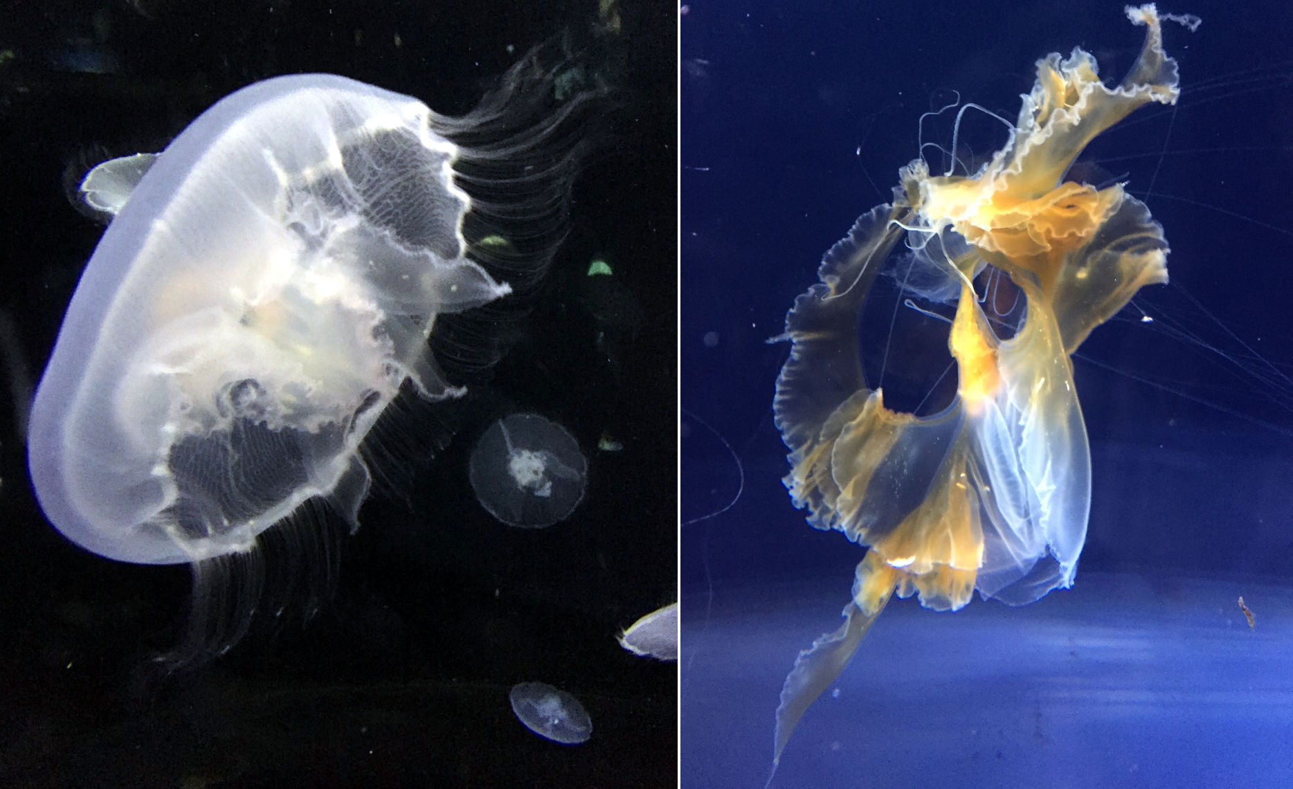 oceanarium osaka iglawpodrozy