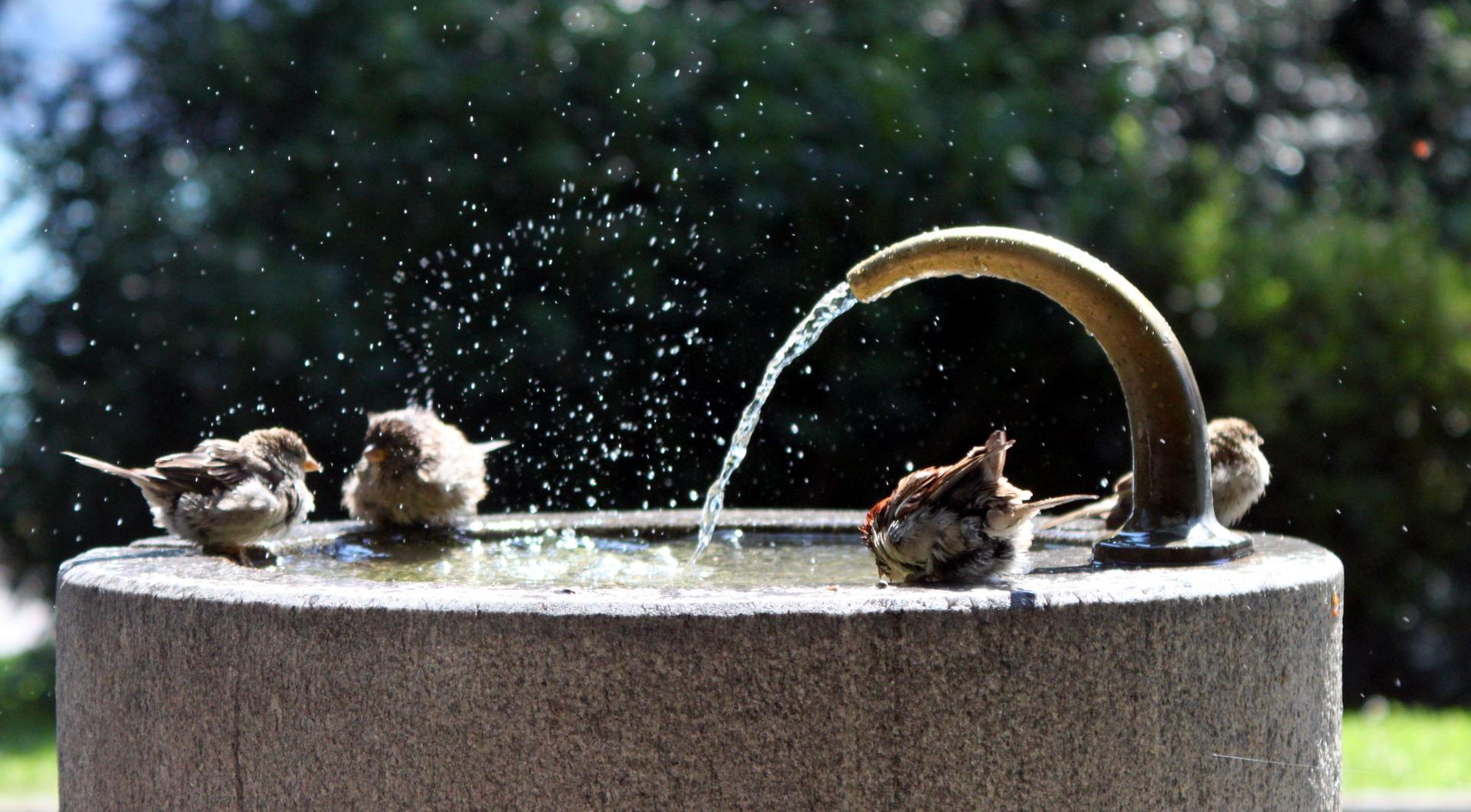 szwajcaria lugano miastolugano szwajcarialugano luganopark wroble fontanna iglawpodrozy