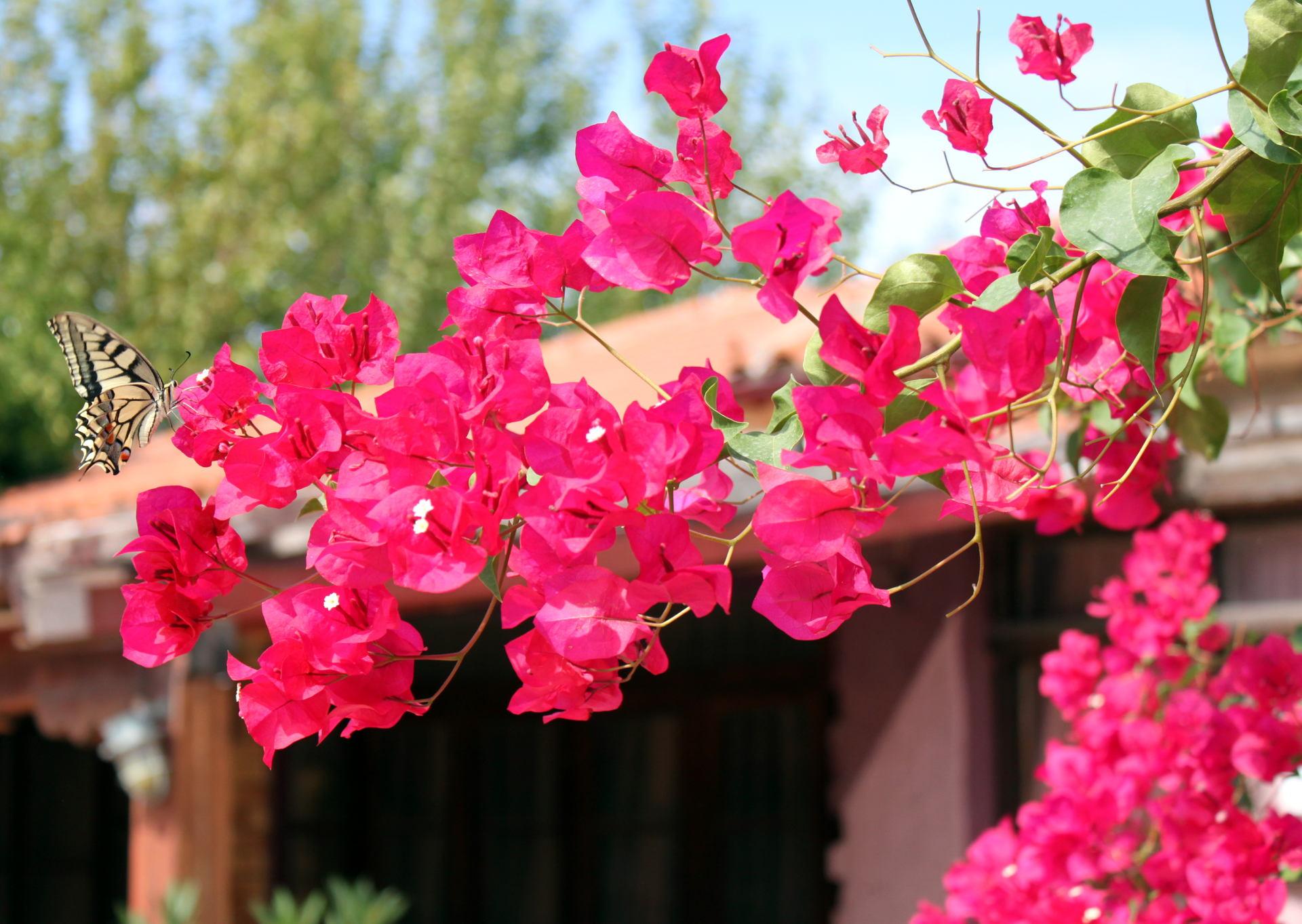 zakynthos grecja rosliny kwiaty iglawpodrozy