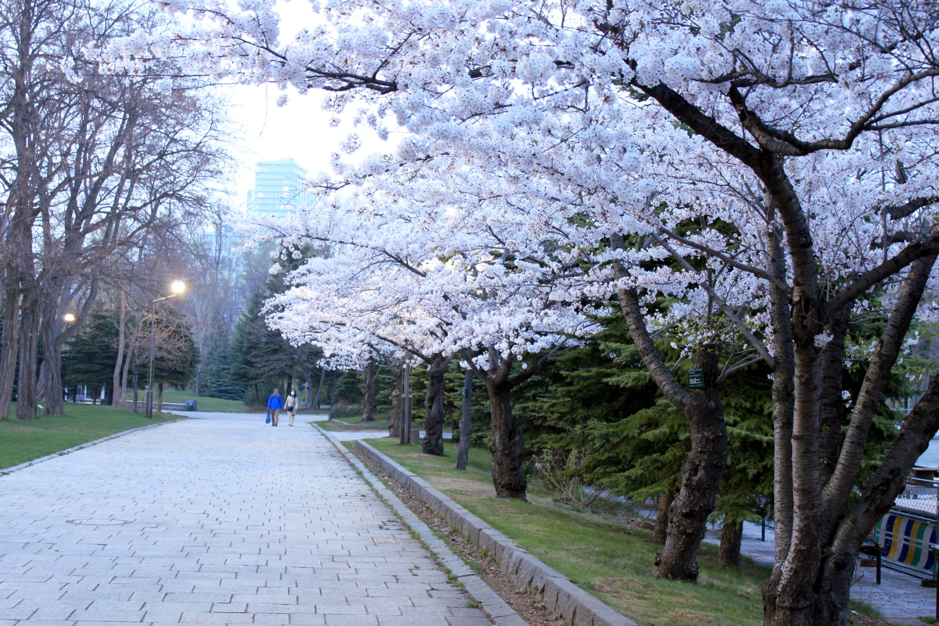 japonia sapporo sapporojapan hokkaido park nakajimapark iglawpodrozy