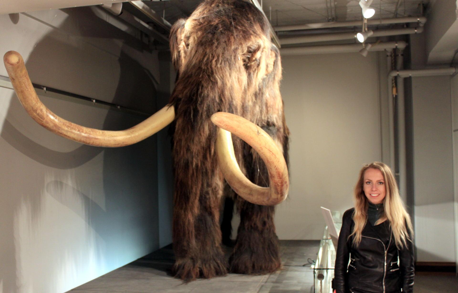 japonia sapporo muzeum hokkaidomuzeumuniwersyteckie hokkaidouniversitymuseum historiahokkaido muzeumhokkaido muzeumsapporo mamut iglawpodrozy