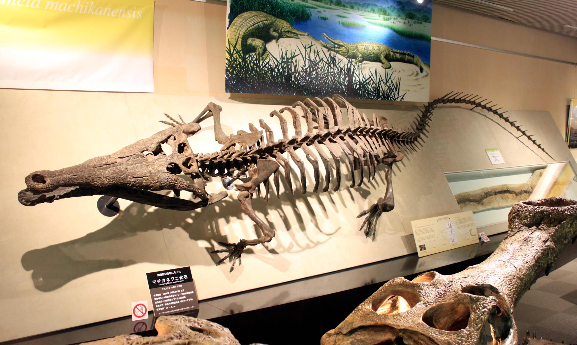 japonia sapporo muzeum hokkaidomuzeumuniwersyteckie hokkaidouniversitymuseum historiahokkaido muzeumhokkaido muzeumsapporo szkielet aligator iglawpodrozy