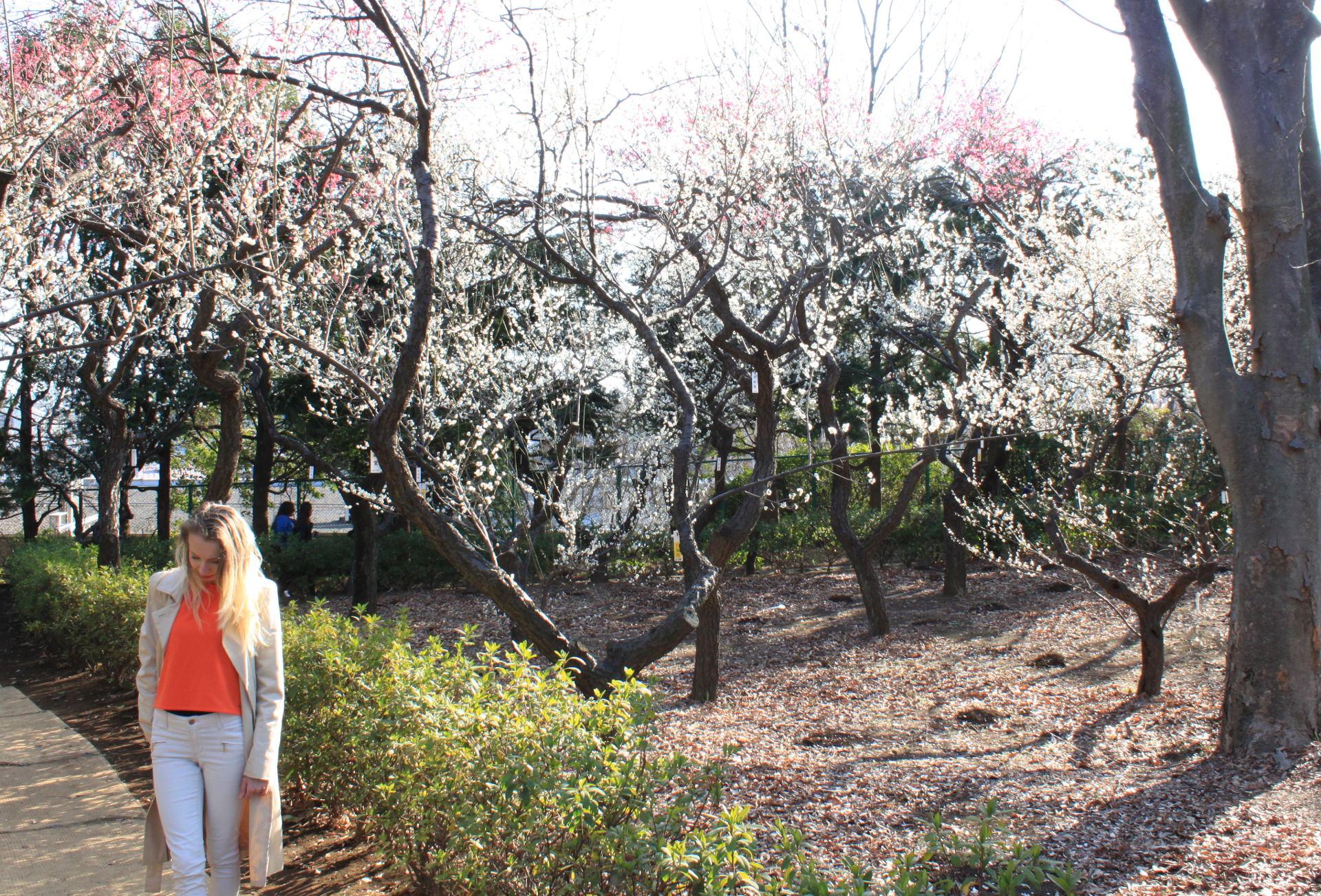 Hanegi Park Tokio iglawpodrozy
