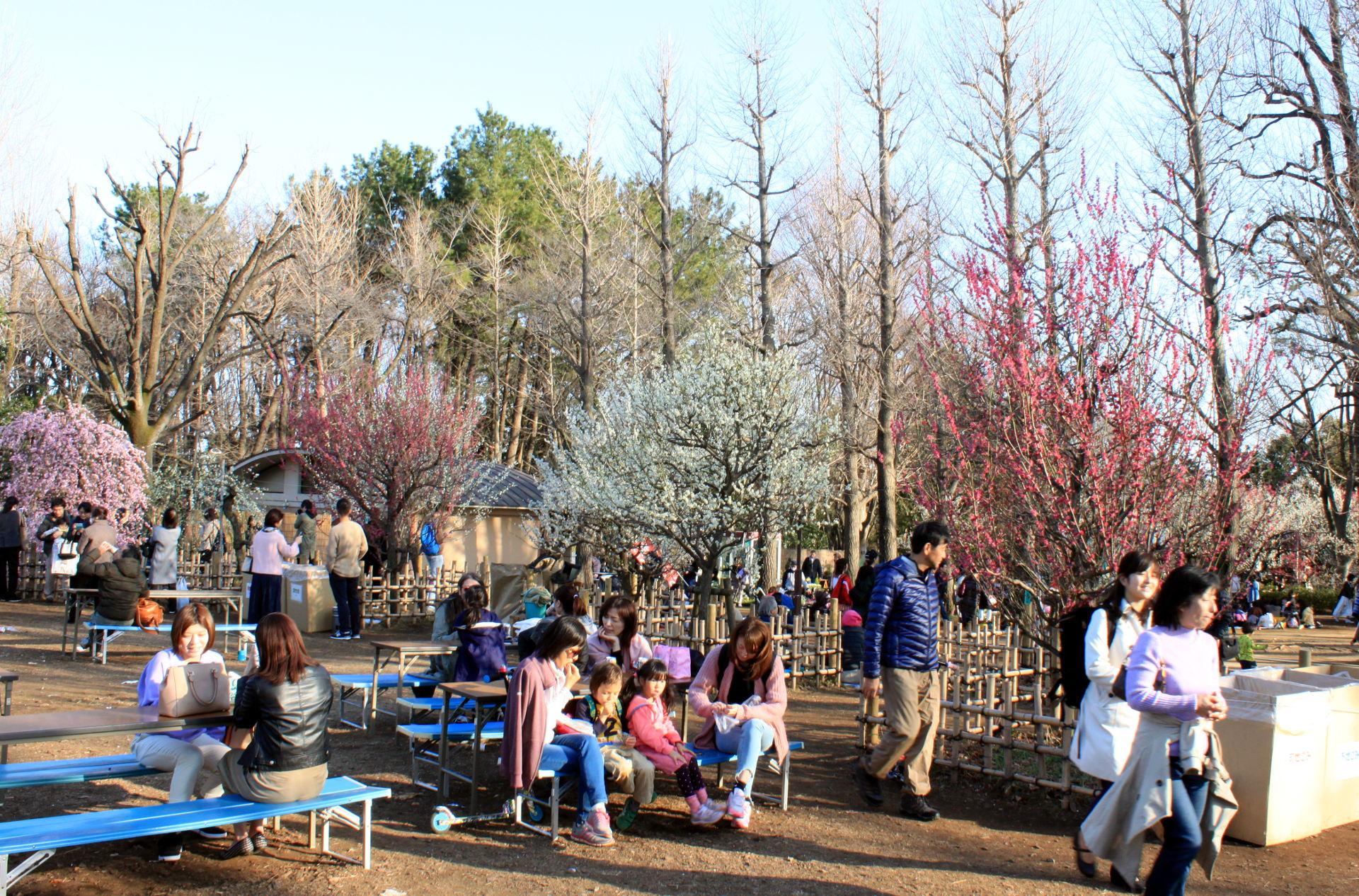 Hanegi Park Tokio