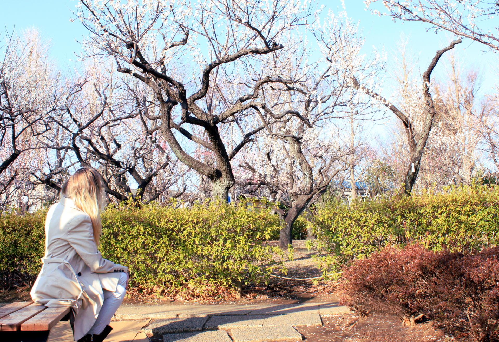 tokio japonia tokyo japan park kwitnacawisnia kwiaty cherryblossom hanami sakura springinjapan wiosnawjaponii iglawpodrozy