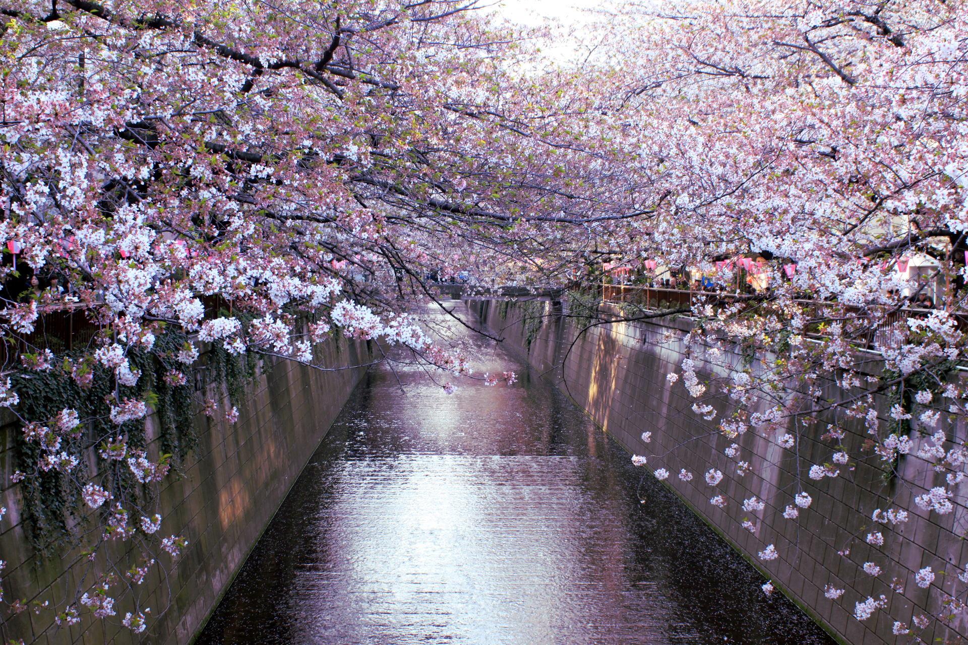 tokio japonia tokyo japan park kwitnacawisnia kwiaty cherryblossom hanami sakura springinjapan wiosnawjaponii iglawpodrozy kimono