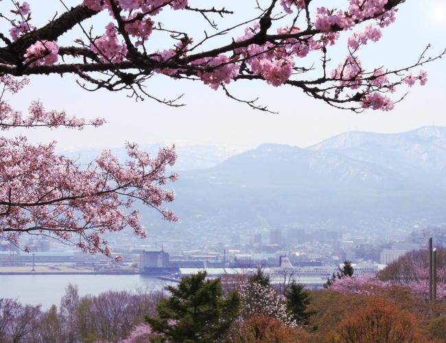japonia hokkaido widok natura gory kwitnaca wisnia iglawpodrozy