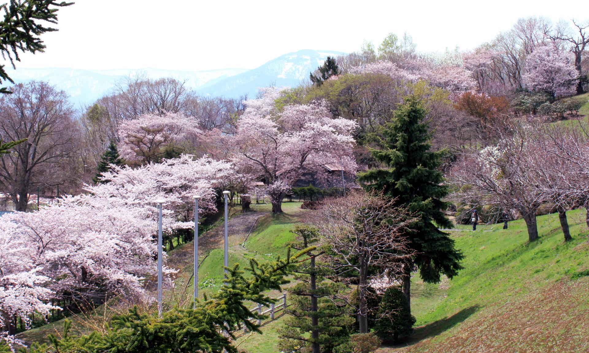 japonia hokkaido widok gory wisnia iglawpodrozy