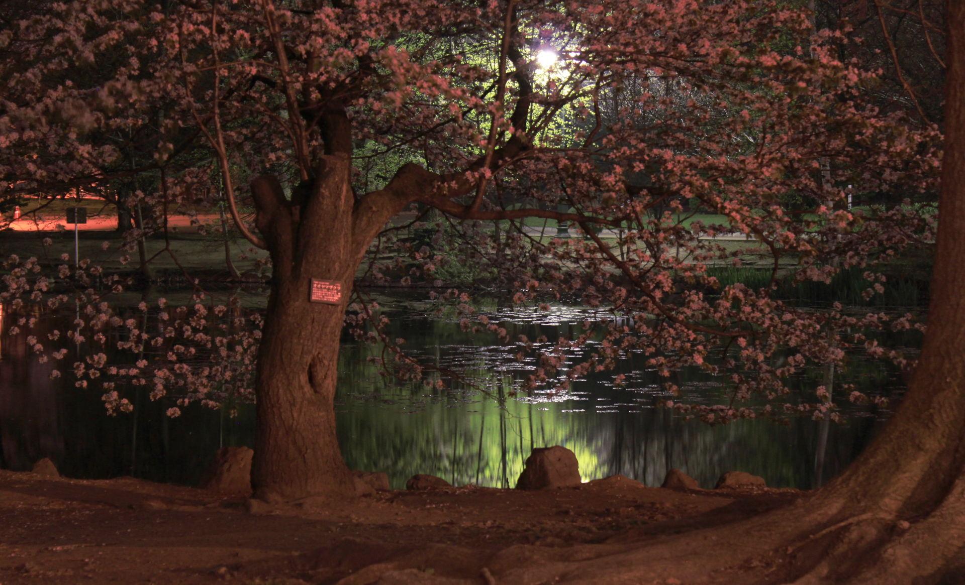 japonia hokkaido sapporo widok noca iglawpodrozy