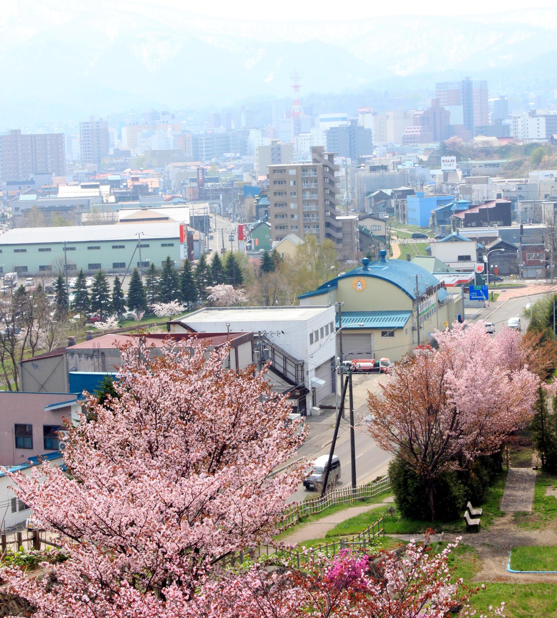 japonia hokkaido widok miasto otaru gory i kwitnaca wisnia iglawpodrozy