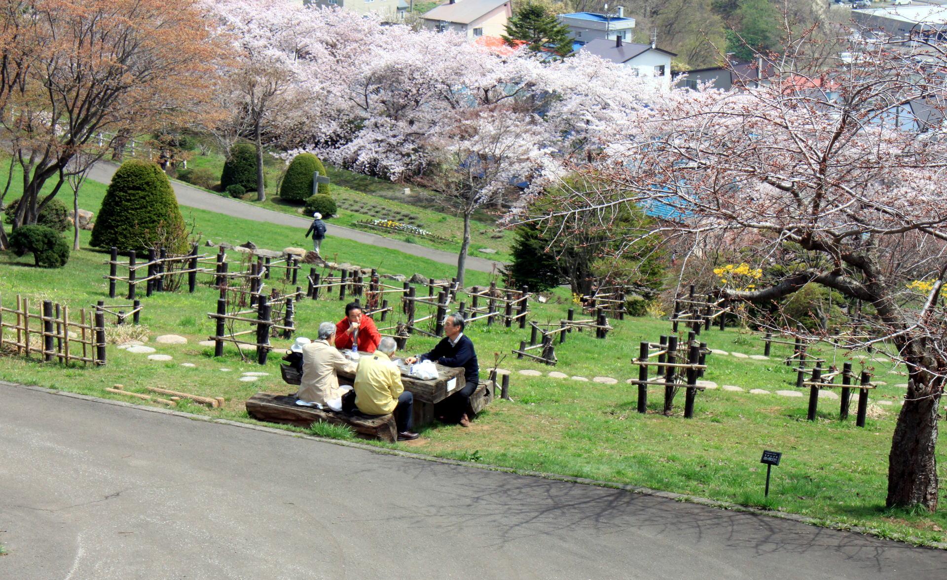 japonia mieszkancy hokkaido w parku piknik iglawpodrozy