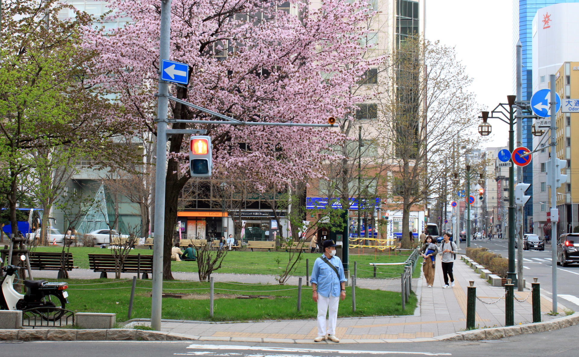 hokkaido japonia sapporo park odori wiosna kwitnaca wisnia iglawpodrozy