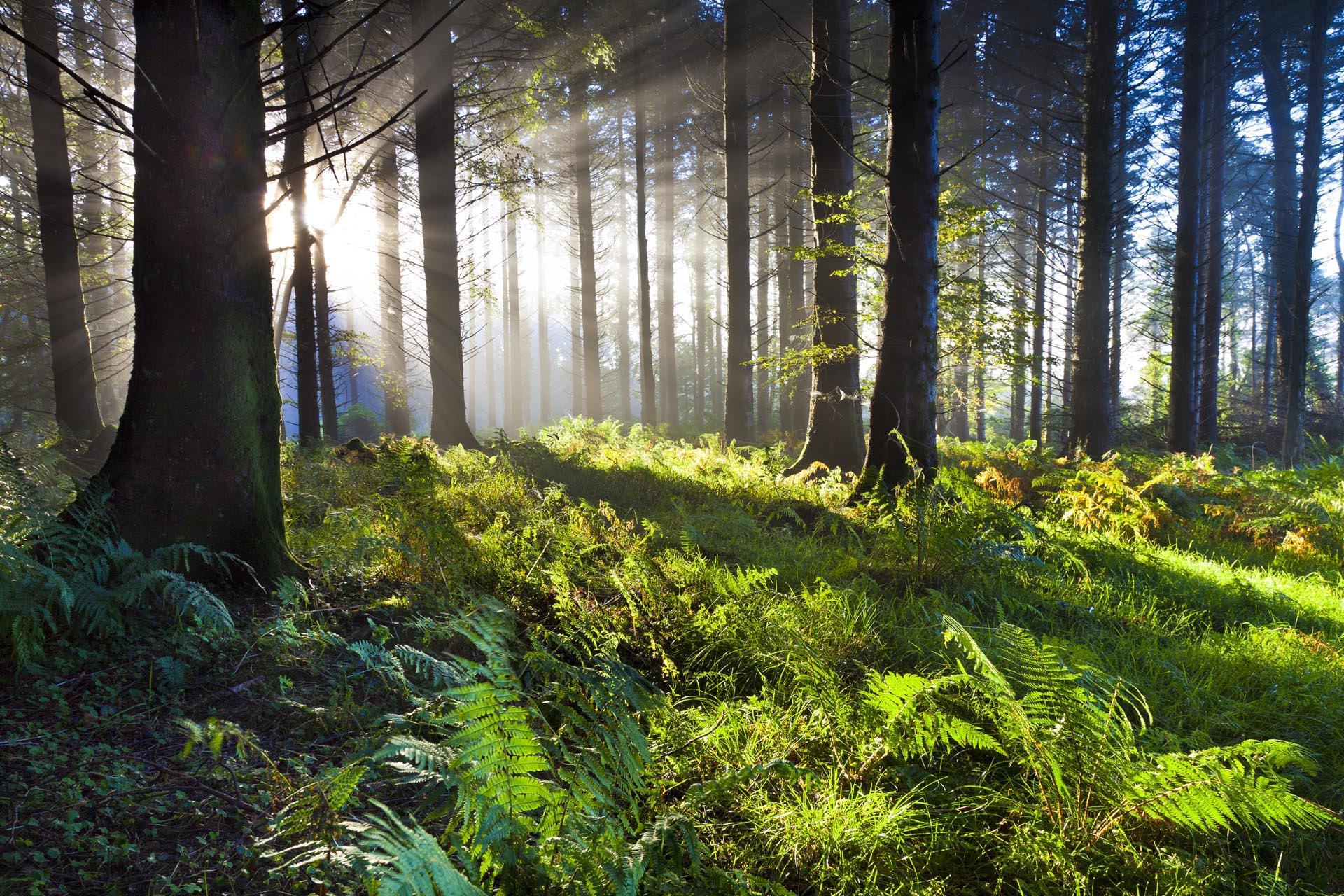 Αποτέλεσμα εικόνας για bosque de valsain