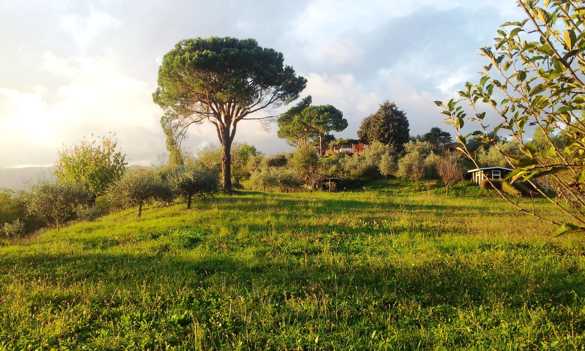 IMPORTANTE VILLA IN ZONA COLLINARE, IN VENDITA NELLE COLLINE LIMITROFE AL BASSANESE - Foto 0 di 6