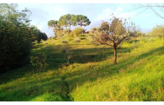 IMPORTANTE VILLA IN ZONA COLLINARE, IN VENDITA NELLE COLLINE LIMITROFE AL BASSANESE - Foto 1 di 6