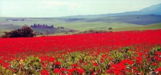 Toscana Val d Orcia