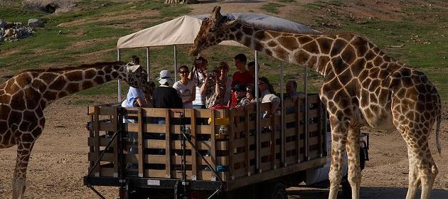 San Diego Safari Park - Tour 21 giorni arrivo a Phoenix e ritorno da New York