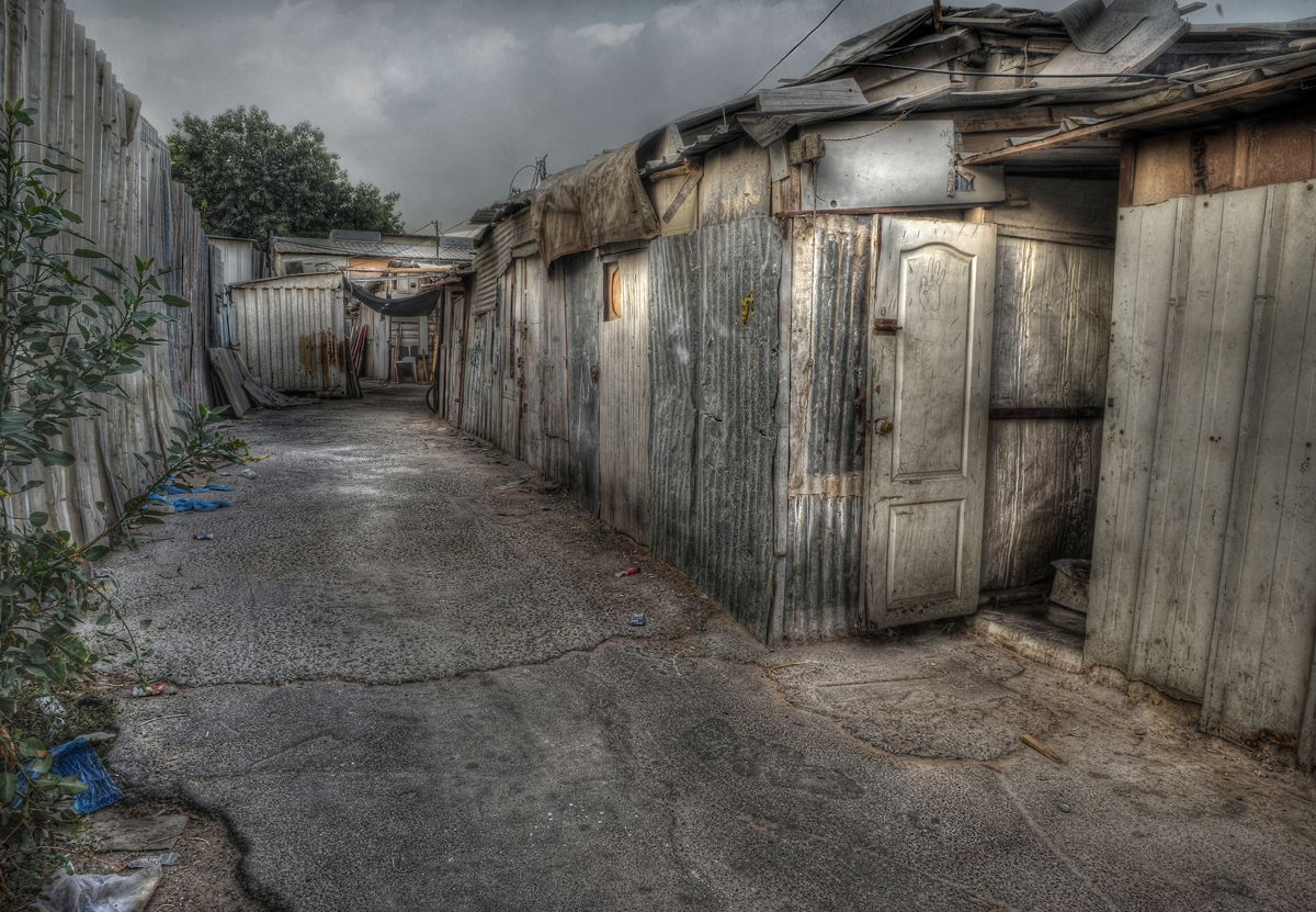 Back Yard 8